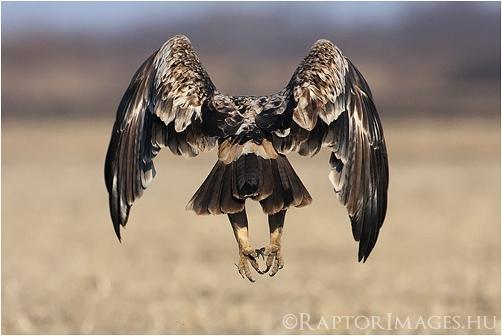 3rd-plumage EIE