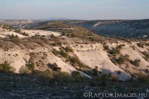 A régió (Eskisehír) jellemző parlagi sasos költőhelye