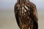 Perching 2nd cy bird