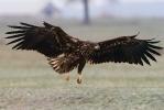2nd cy bird landing